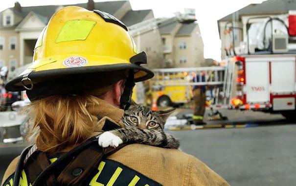 Кот вцепился в свою спасительницу