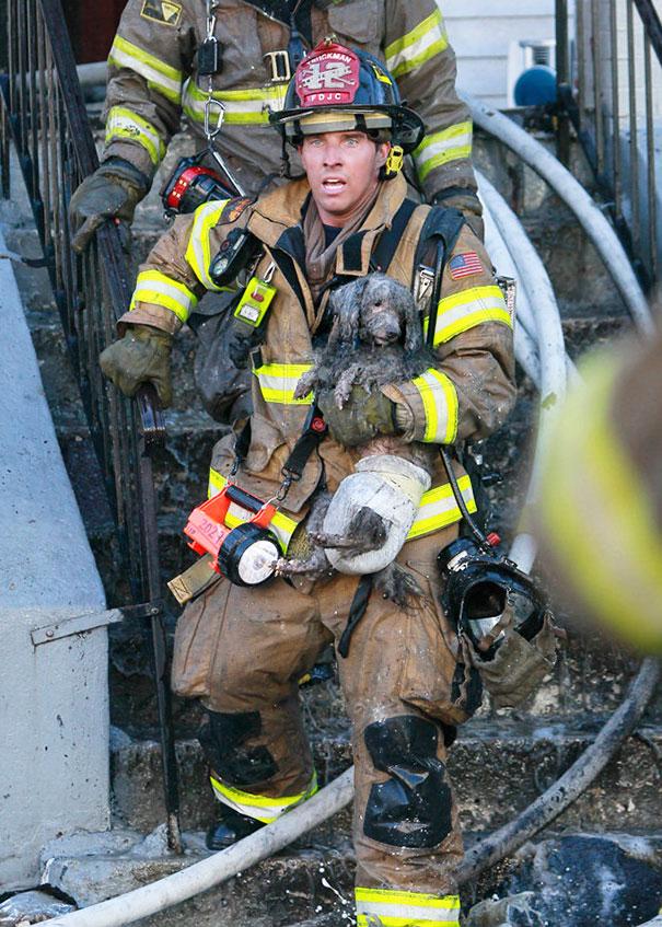 Спасатель вынес из огня пуделя по имени Джозеф, США.