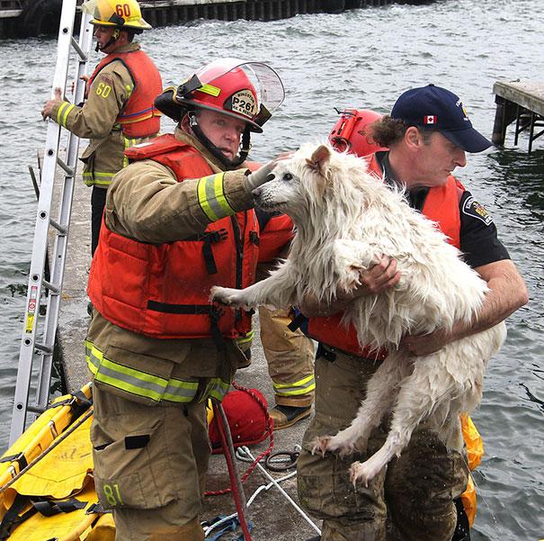 Спасатели достали слепую собаку из озера Онтарио