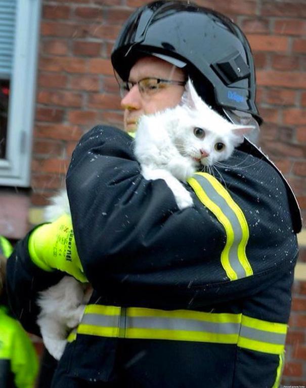 Вот так нежно в Дании спасали кота из горящего дома
