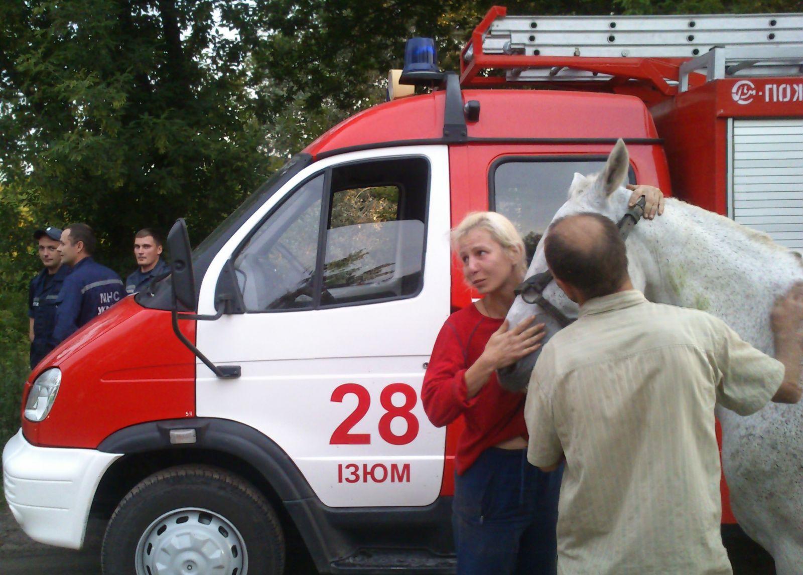 В 2014 году в Изюмском районе в канализацию глубиной в два метра провалился белый конь. Его достали с помощью трактора, и это было прекрасно